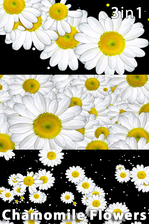 Chamomile Flowers (3in1)