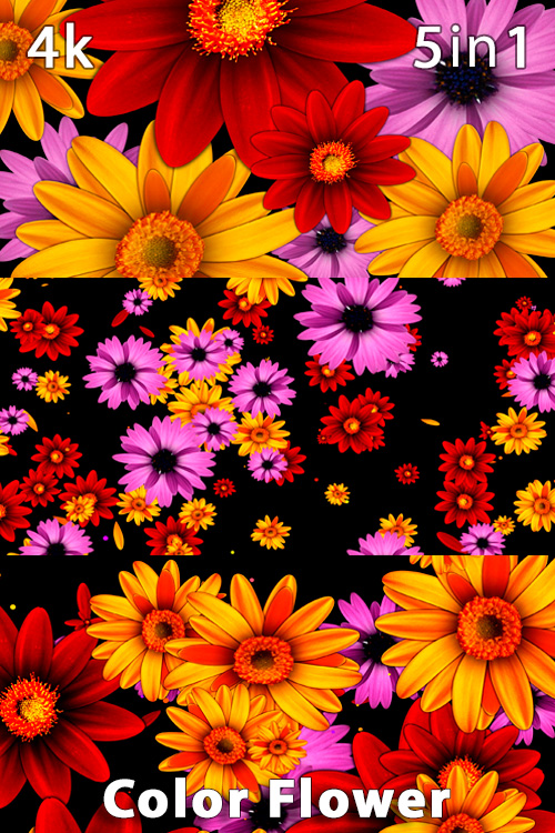 Color Flower 4K (5in1)