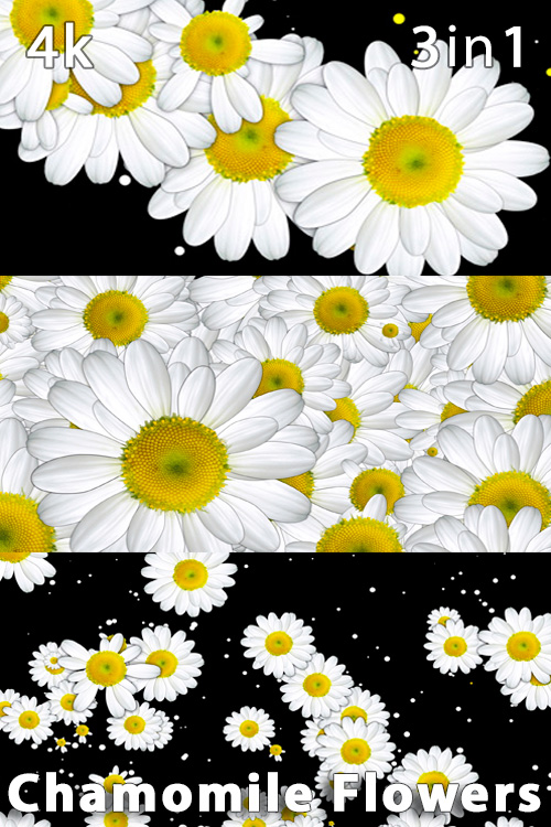 Chamomile Flowers 4K (3in1)
